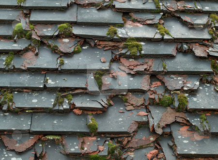 How do you know when it is time for roof repair or a new roof? Sometimes  it's obvious, like when a tree has fallen and taken out part of your roof,  ...