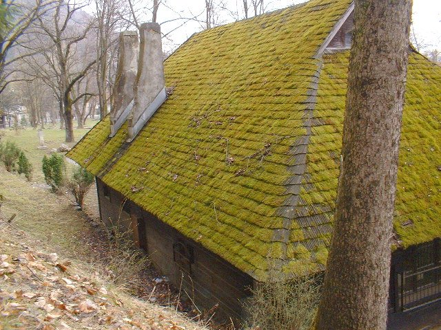 Moss Covered Roof