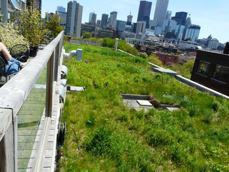 Kids Advocate For Green Roof Roof Rocket